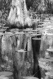 赛普里斯镜子 免版税库存图片