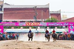 赛跑在春武里市的水牛城 免版税库存图片