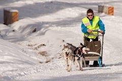 赛跑在特兰西瓦尼亚的狗雪橇 免版税库存图片