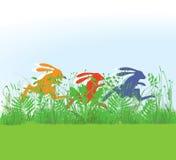 赛跑在草甸的兔子 库存照片