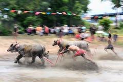 赛跑文化泰国的水牛城 免版税库存照片