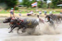 赛跑文化泰国的水牛城 免版税库存图片