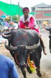 赛跑泰国的水牛节日 库存照片