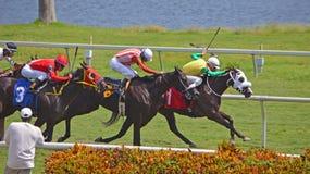 赛跑的纯血种马转动一 免版税库存照片