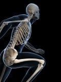 赛跑者解剖学 图库摄影