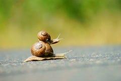 赛跑蜗牛二的庭院 免版税库存图片