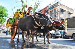 赛跑路水的水牛游行 免版税库存照片