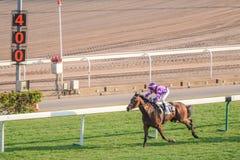 赛马在沙田镇 免版税图库摄影