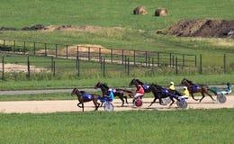 赛马在竞技场Sibirskoe podvorie 免版税库存图片
