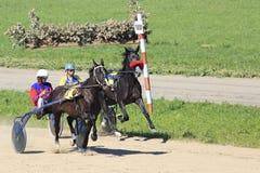 赛马在竞技场Sibirskoe podvorie 库存图片