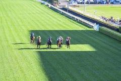 赛马在草皮 免版税图库摄影