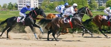 赛马奖的  免版税图库摄影