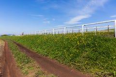 赛马训练风景 免版税库存照片