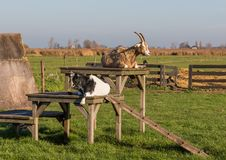赞瑟斯汉斯,Netherland美妙的村庄  免版税图库摄影