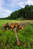 赤杨树播种的日志在草甸被存放 Deforestat 库存照片