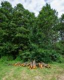 赤杨树播种的日志在草甸被存放 Deforestat 图库摄影