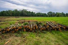 赤杨树播种的日志在草甸被存放 Deforestat 免版税库存图片