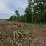赤杨树被放弃的播种的日志在草甸被存放 免版税库存照片