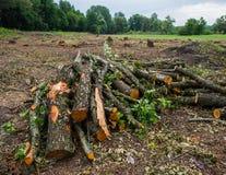 赤杨树被放弃的播种的日志在草甸被存放 免版税库存图片