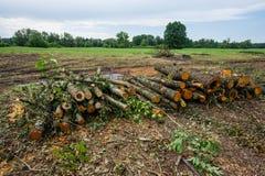 赤杨树被放弃的播种的日志在草甸被存放 免版税图库摄影