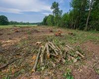 赤杨树被放弃的播种的日志在草甸被存放 库存图片