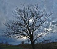 赤裸树和剧烈的天空 免版税库存图片