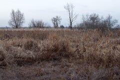 赤裸树和干草在秋天晚上草甸 库存照片