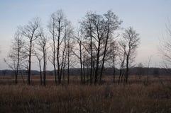 赤裸树和干草在秋天晚上草甸 免版税库存照片