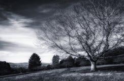 赤裸树和长凳 库存图片