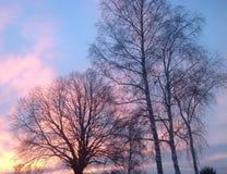 赤裸树在晚上阳光下 免版税库存图片