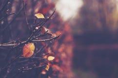 赤裸树在被放弃的秋天公园 库存图片