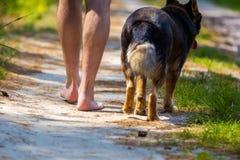 赤足走与狗的人 库存照片