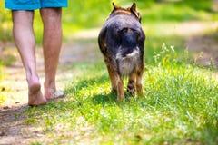 赤足走与狗的人 库存图片