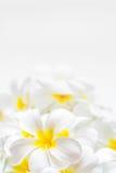 赤素馨花瓣 图库摄影