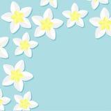 赤素馨花羽毛热带花象集合 夏威夷,巴厘岛植物花框架角落 免版税库存照片