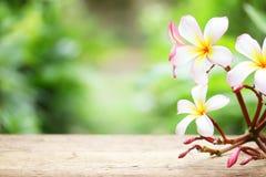 赤素馨花花 库存照片