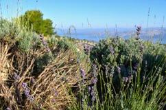 赫瓦尔岛风景淡紫色 库存照片