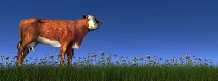 赫里福德母牛- 3D回报 免版税库存照片