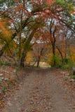 走一串足迹在秋天 免版税库存图片