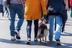 走与一条狗在城市 图库摄影