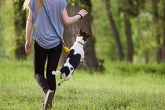 走与一条跳跃的狗的少妇演奏训练 图库摄影