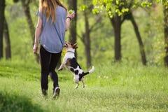 走与一条跳跃的狗的少妇演奏训练 库存照片