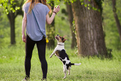 走与一条跳跃的狗的少妇演奏训练 免版税库存图片