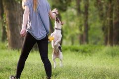 走与一条跳跃的狗的少妇演奏训练 库存图片