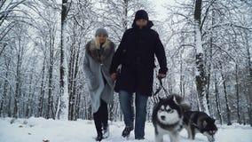 走与两个美丽的西伯利亚蓬松爱斯基摩一起的逗人喜爱的微笑的夫妇在冬天多雪的森林里 影视素材