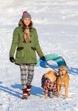 走与两个美国人美洲叭喇狗冬天的少妇 免版税库存图片