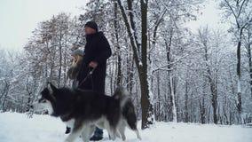 走与两个逗人喜爱的西伯利亚蓬松爱斯基摩一起的美好的夫妇在冬天多雪的森林里 股票录像