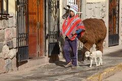 走与在库斯科省秘鲁街道上的喇嘛的秘鲁男孩  免版税库存照片