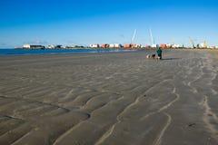 走与在海滩的2条狗的人 库存图片
