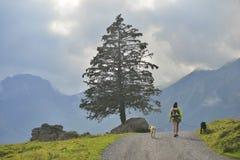 走与她的狗的女孩在Oeschinensee, Kandersteg附近 瑞士 免版税库存照片